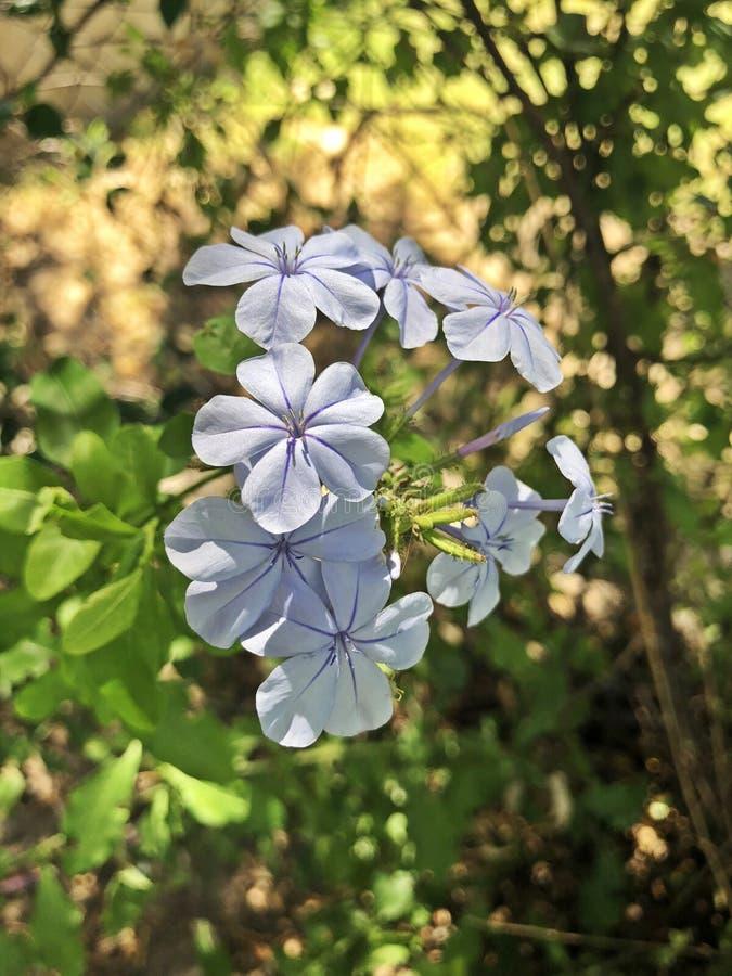 Неимоверная съемка от красивых цветков стоковая фотография