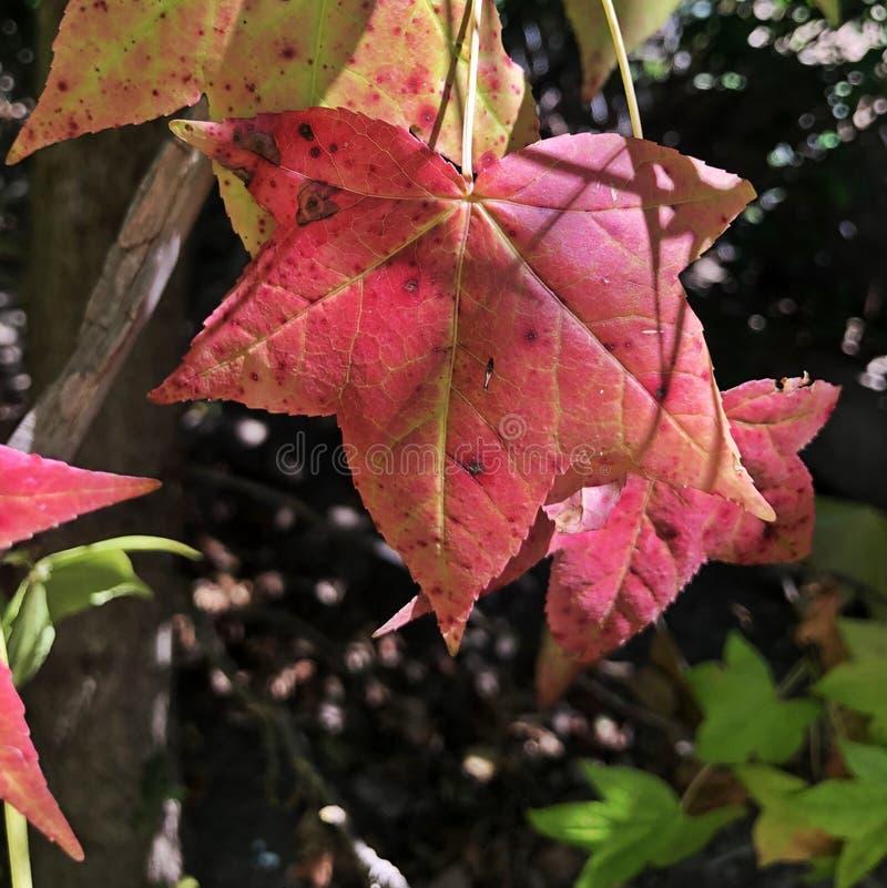 Неимоверная съемка от красочных лист стоковая фотография