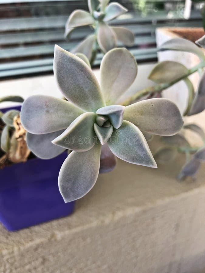 Неимоверная съемка от симпатичного цветка стоковые фотографии rf