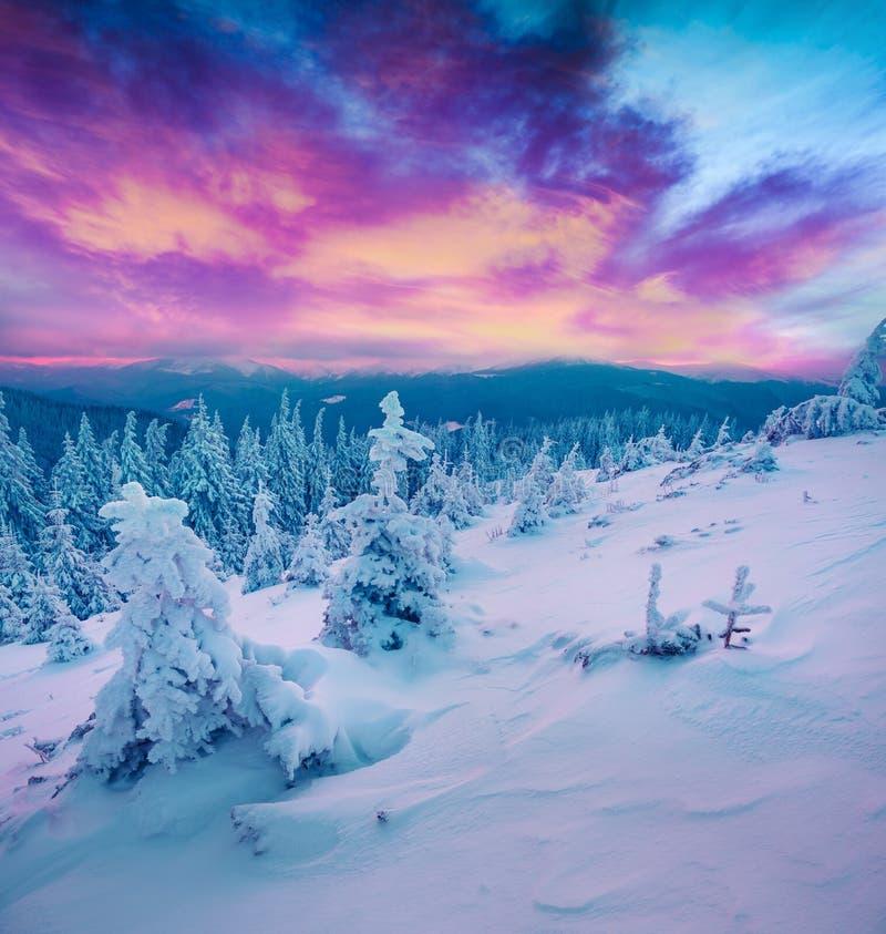 Неимоверный восход солнца зимы в прикарпатских горах с бухтой снега стоковое изображение rf