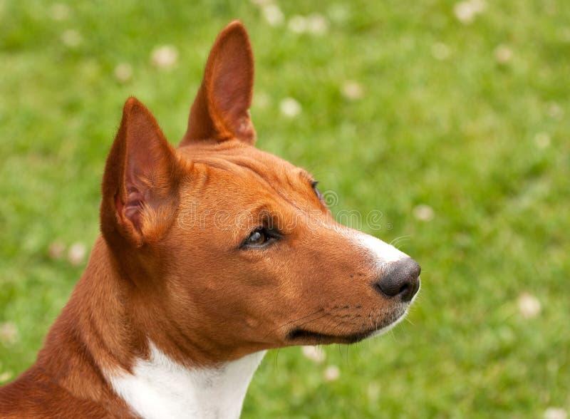 неисповедимый щенок стоковая фотография