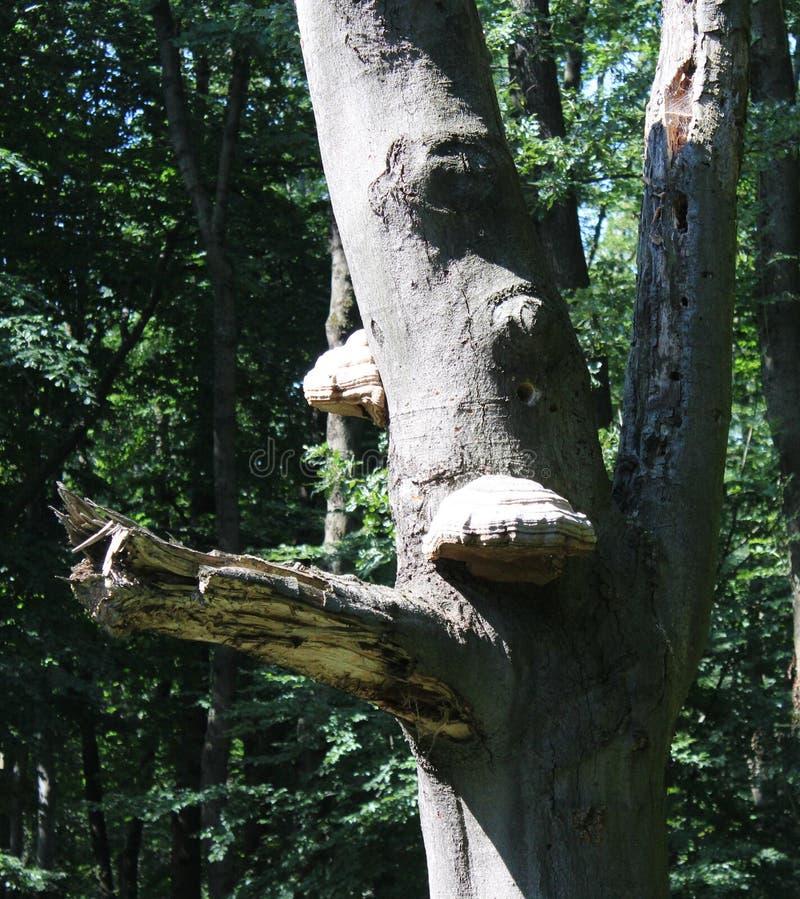 Некоторые большие грибы стоковые изображения rf