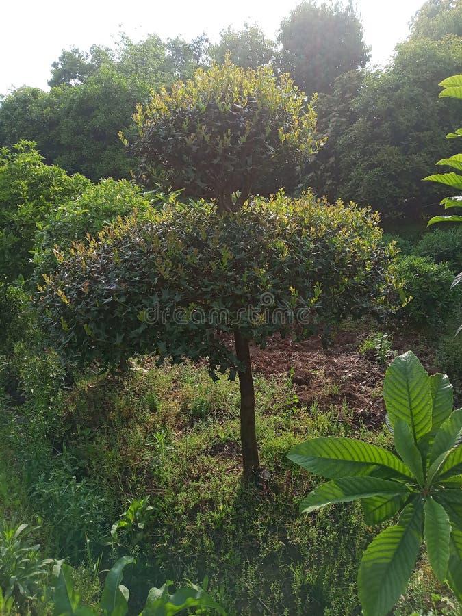 Деревья в солнце стоковая фотография