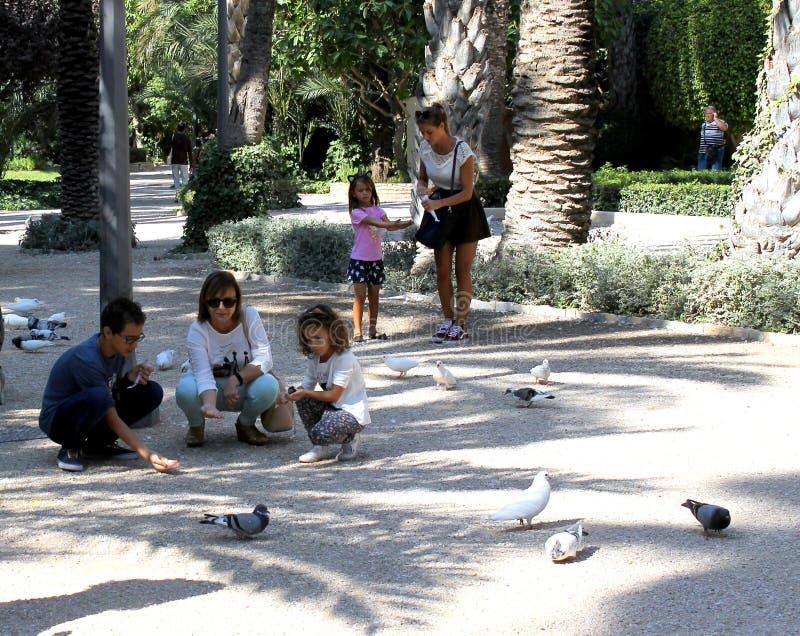 Некоторые женщины и дети подают голуби на парке в Elche, Аликанте, Испании стоковые изображения rf