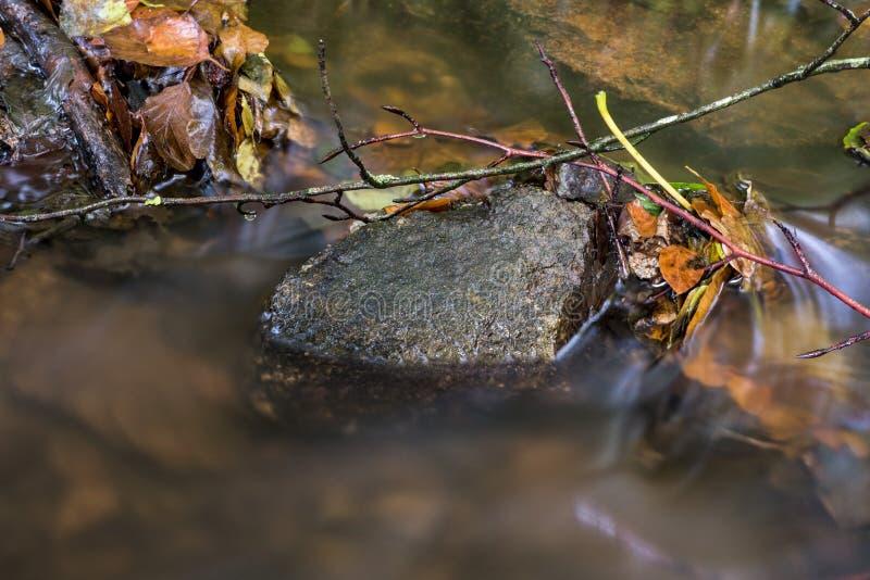 Некоторые листья осени упаденные в реку стоковое изображение