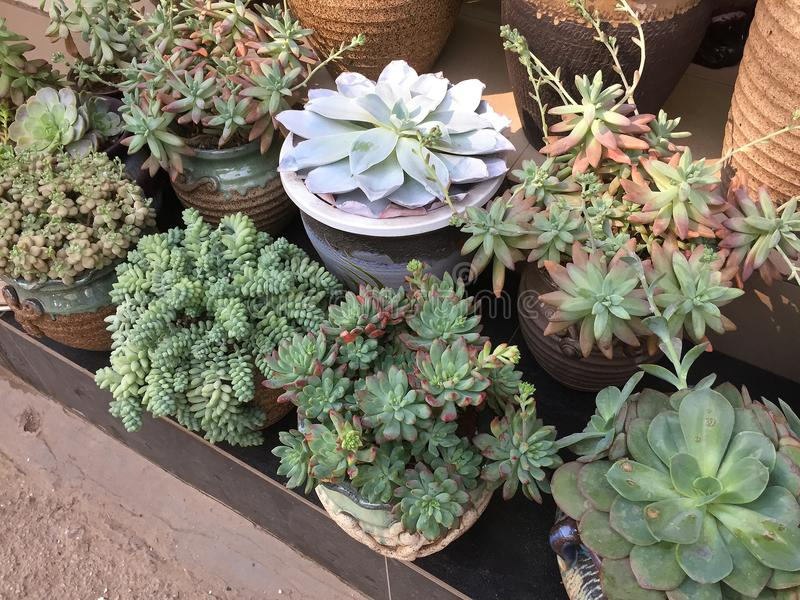 Некоторые милые succulents в цветочном горшке для продажи стоковые изображения