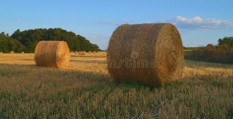 Некоторые сена в Франции стоковые фотографии rf