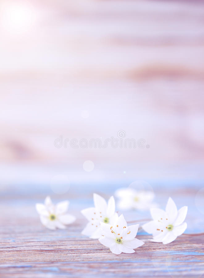 Некоторые цветки ветреницы предложения стоковые фото