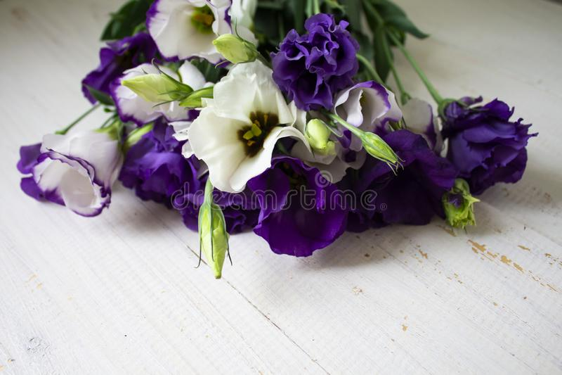 Некоторые цветки в саде стоковая фотография rf