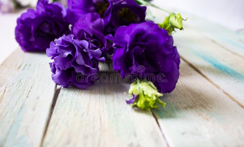Некоторые цветки в саде стоковая фотография