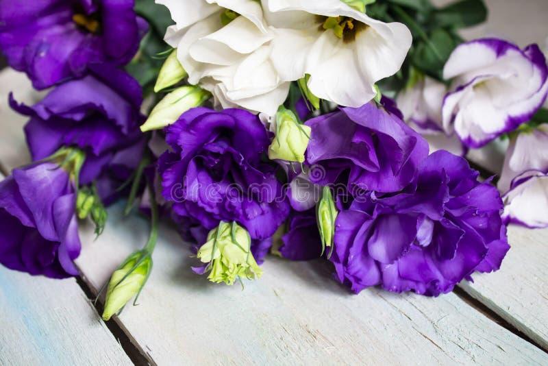 Некоторые цветки в саде стоковые фото