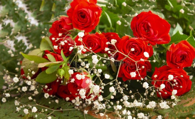 Некоторые цветки в саде стоковые фотографии rf