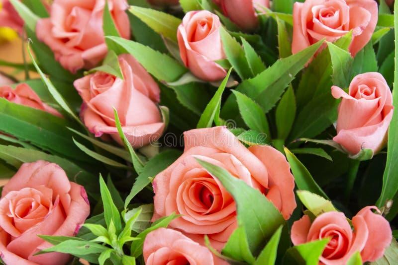 Некоторые цветки в саде стоковые изображения rf