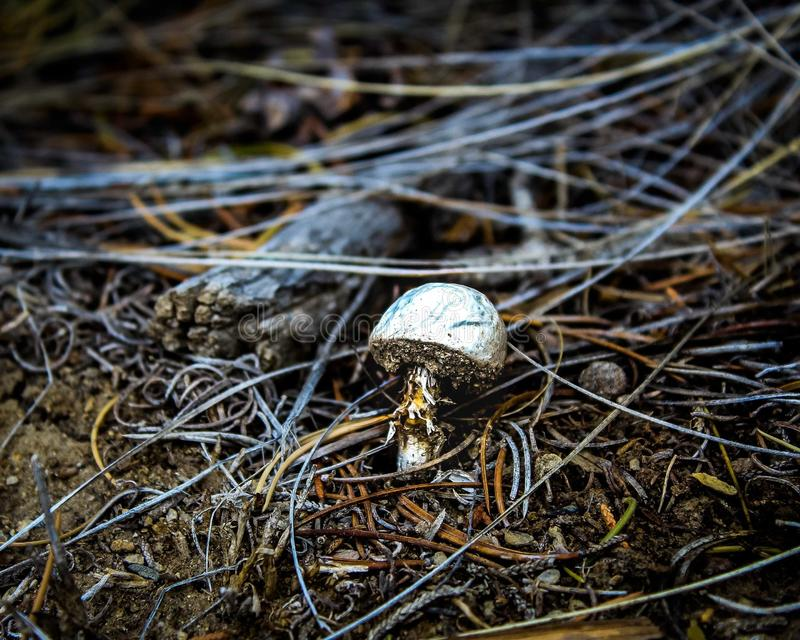 Некрасивый гриб повернул красивый стоковое изображение rf