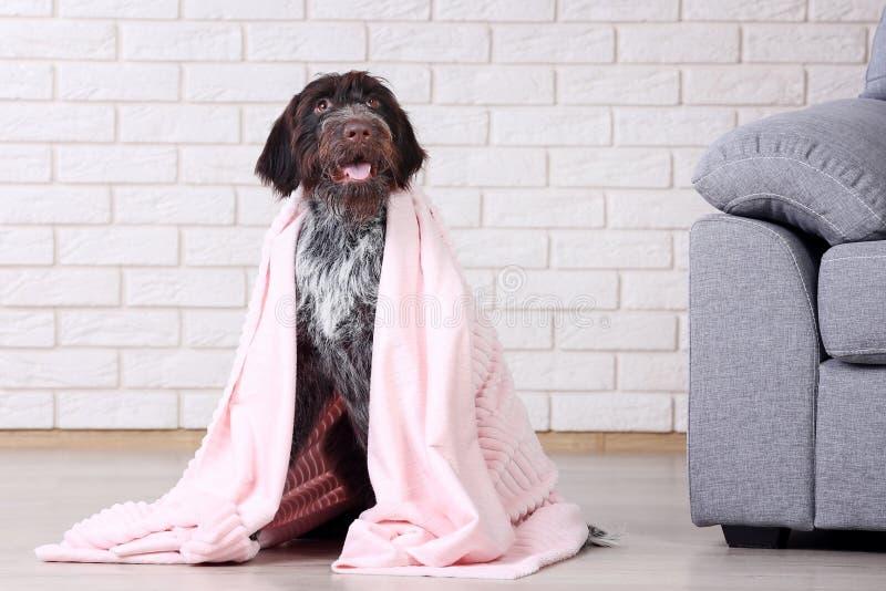 Немецкая собака указателя стоковая фотография rf