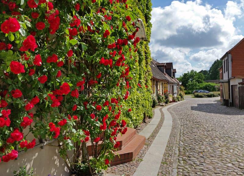 Немецкая стена города Wittstock/Dosse красивая с розами стоковая фотография