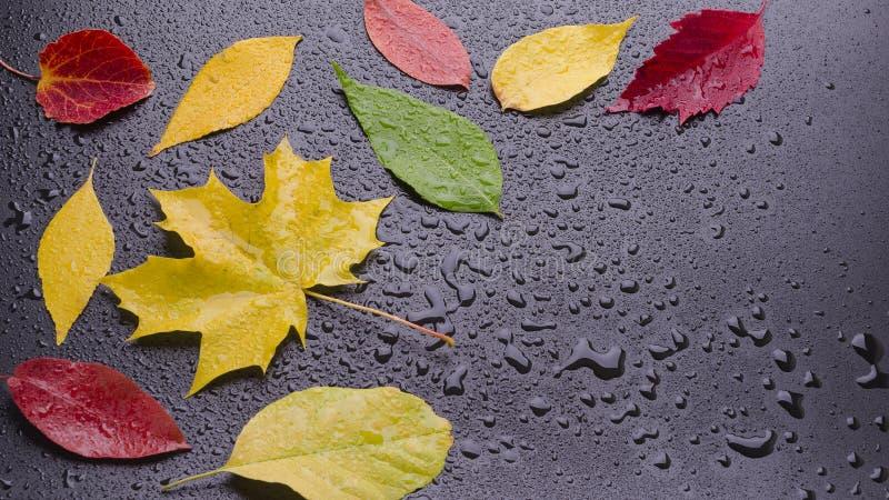 Немногие влажные листья стоковая фотография rf