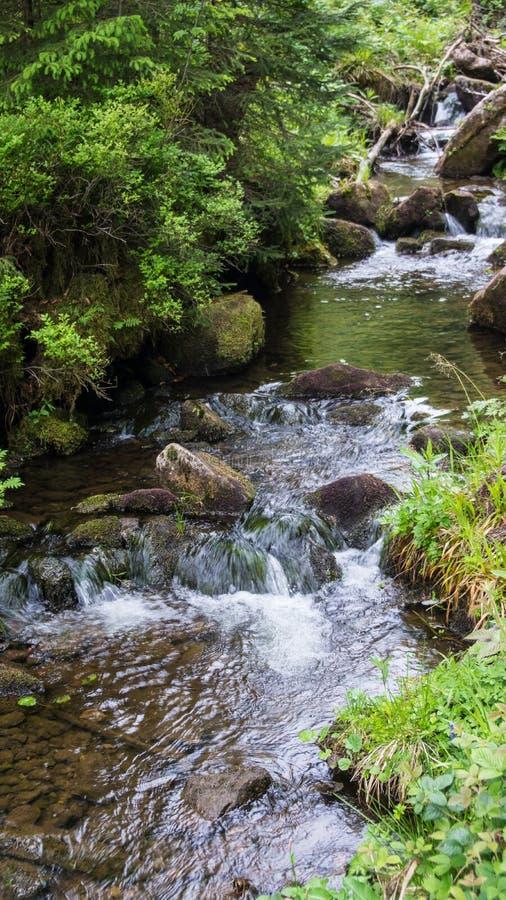 Немногое водопад в реке черного леса стоковые изображения rf