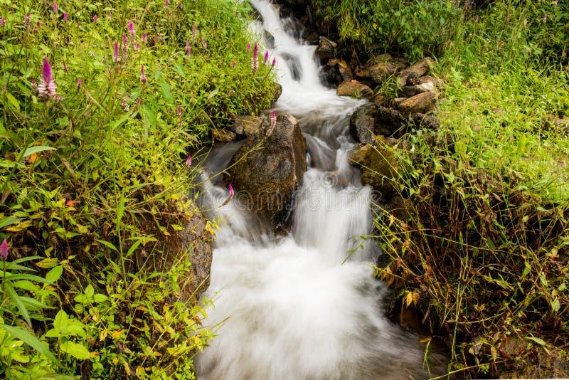 Немногое водопад и argentea Celosia цветок стоковое изображение