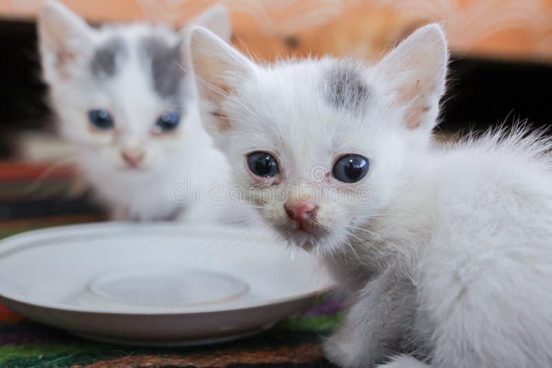 Немногое грязные больные котята в укрытии стоковые изображения rf