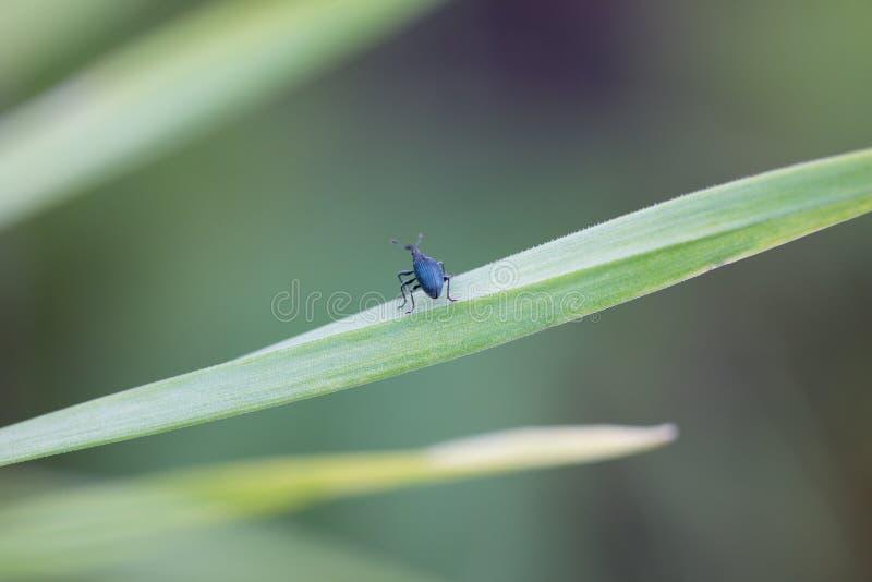 Немногое жук на зеленых лист стоковые изображения