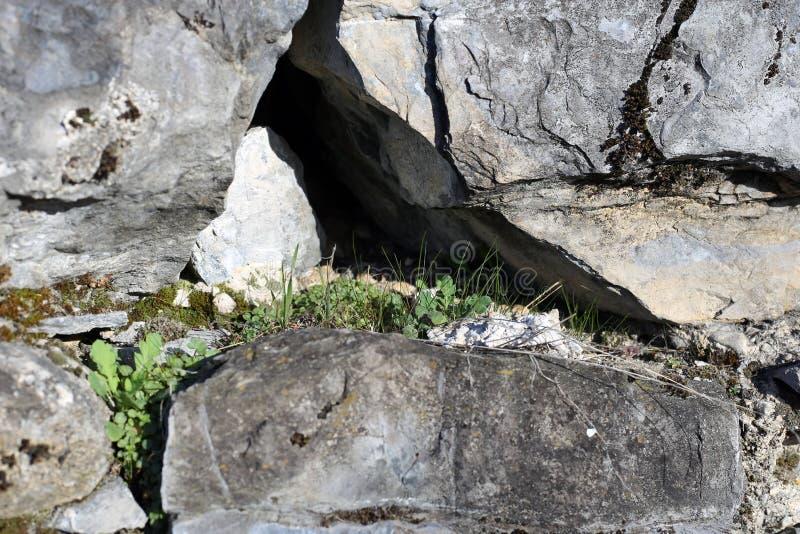 Немногое засаживает расти от отказа в каменной стене стоковые фото