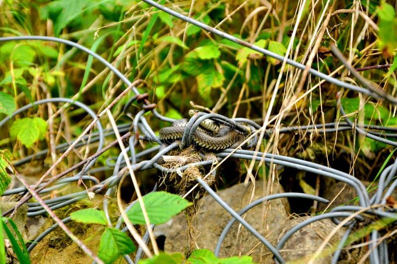 Немногое змейка на камне стоковая фотография rf