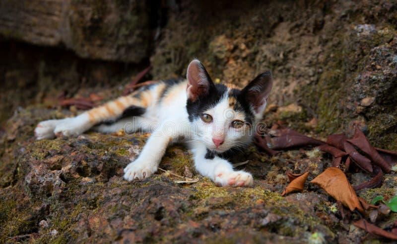 Немногое котенок потерянный в парке Случайный портрет младенца кота Прекрасный крупный план киски Киска спать внешняя стоковое изображение