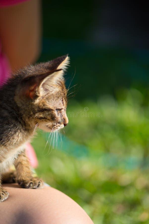 Немногое кот коротких волос на ноге женщин стоковое изображение rf