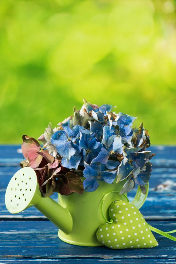 Немногое моча консервная банка с цветениями гортензии стоковая фотография rf