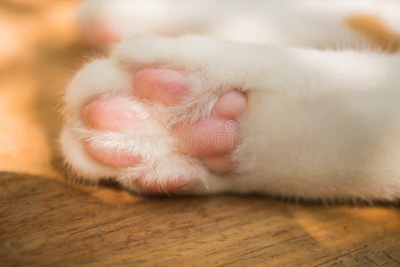 Немногое ноги кота выглядит милым стоковая фотография rf