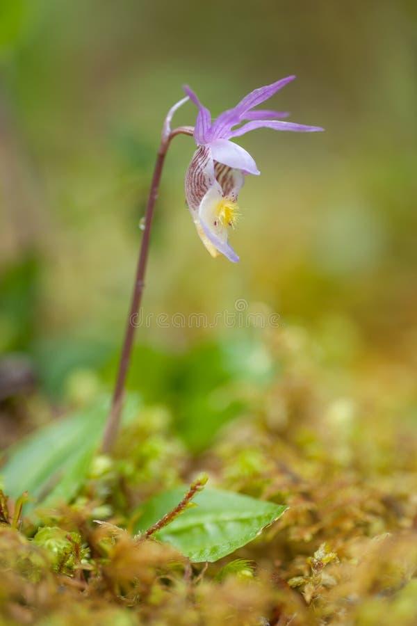 Немногое орхидея в лесе стоковое изображение