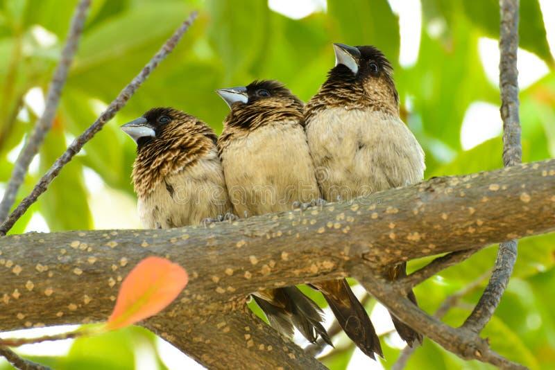Немногое птицы на ветви стоковые изображения