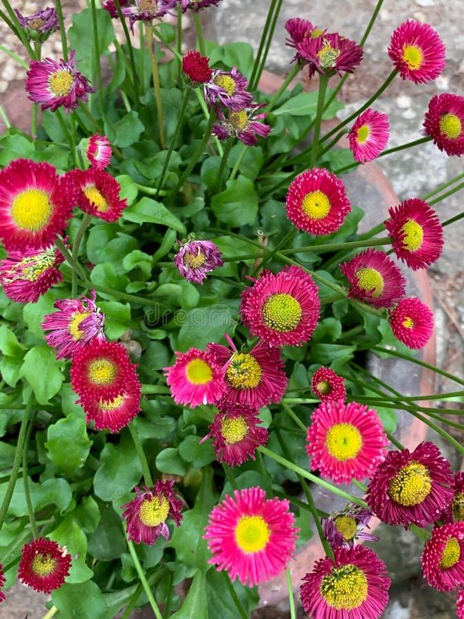 Немногое розовая предпосылка цветка стоковая фотография rf