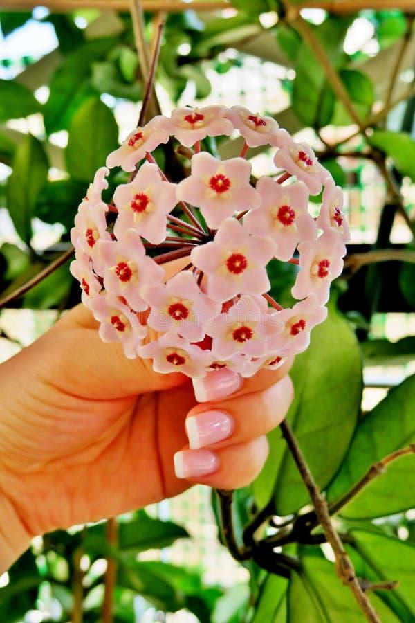 Немногое розовые цветки, красивые розовые цветки стоковые изображения rf