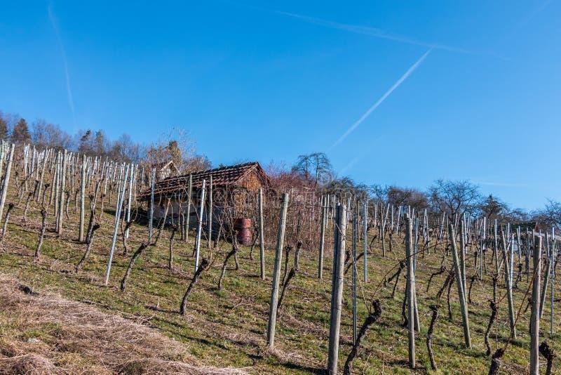 Немногое hovel в середине wineyard стоковая фотография rf