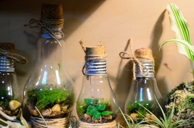 Немногое terrariums электрической лампочки стоковое изображение rf