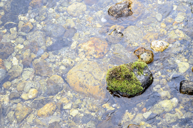 Немного зеленый цвет стоковые фотографии rf