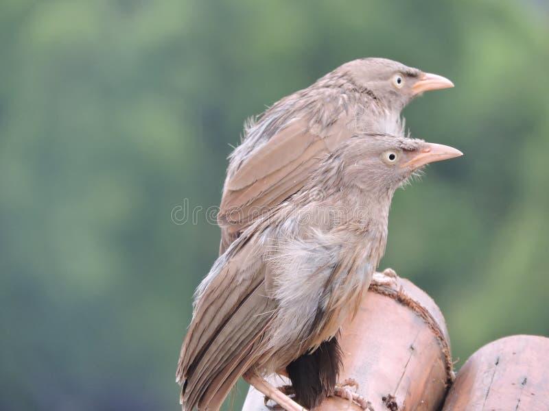 Ненастные птицы стоковое изображение rf