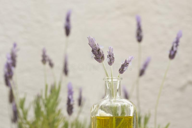 необходимое масло лаванды цветков стоковые фотографии rf