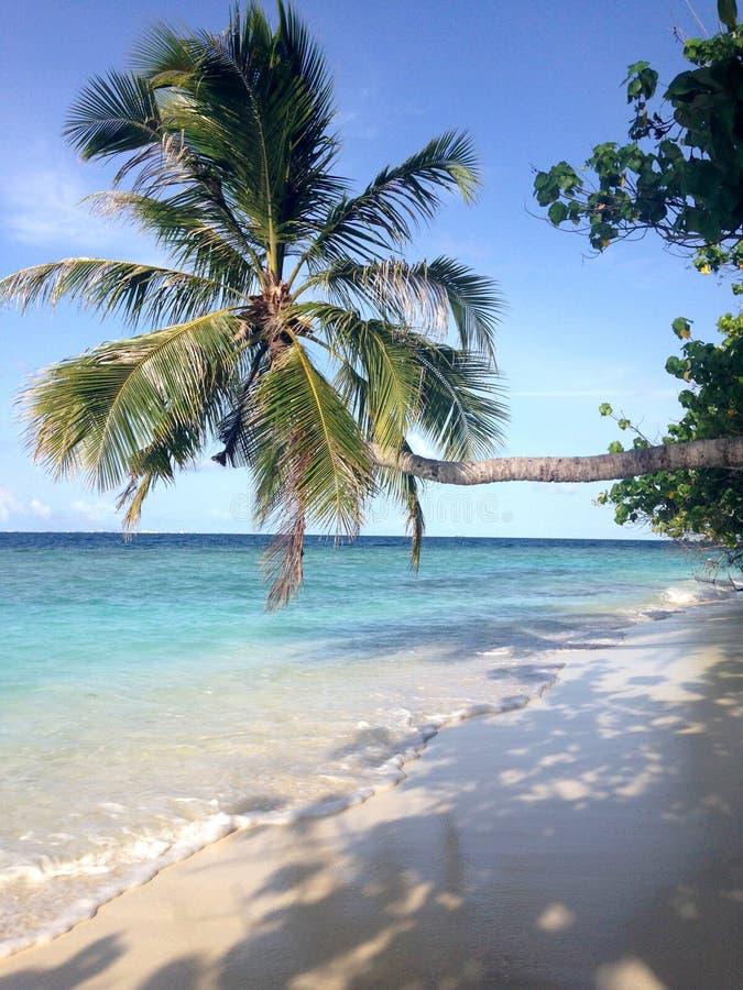 Необыкновенная горизонтальная пальма на предпосылке океана стоковое фото rf