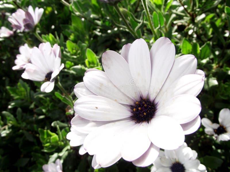 необыкновенная группа в составе белые цветки стоковые изображения