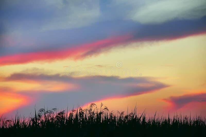 Необыкновенное красивое небо и тростники стоковые изображения rf