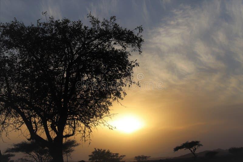 Необыкновенный заход солнца в пустыне стоковые фото
