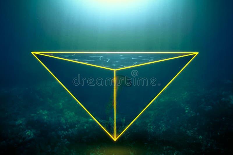 Неоновые медузы стоковые фотографии rf