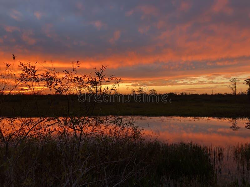 неоновый заход солнца в поле и 2 деревьях стоковое изображение rf