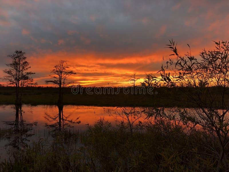 неоновый заход солнца в поле и 2 деревьях стоковое фото rf