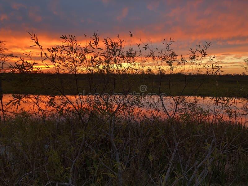 неоновый заход солнца в поле и 2 деревьях стоковое фото