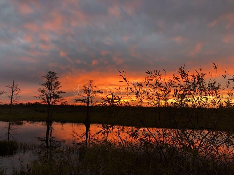 неоновый заход солнца в поле и кипарисах стоковая фотография