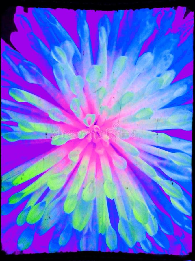 Неоновый цветок стоковая фотография